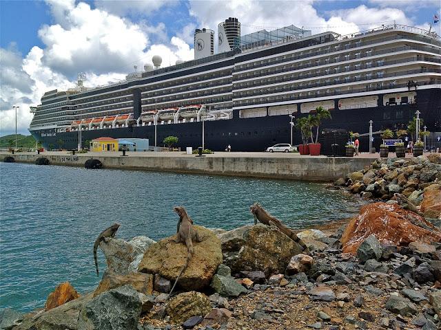 Three iguanas looking at the docked ship